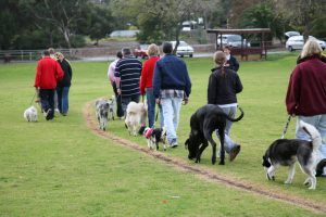 All breeds obedience training class on a sunday morning in winter