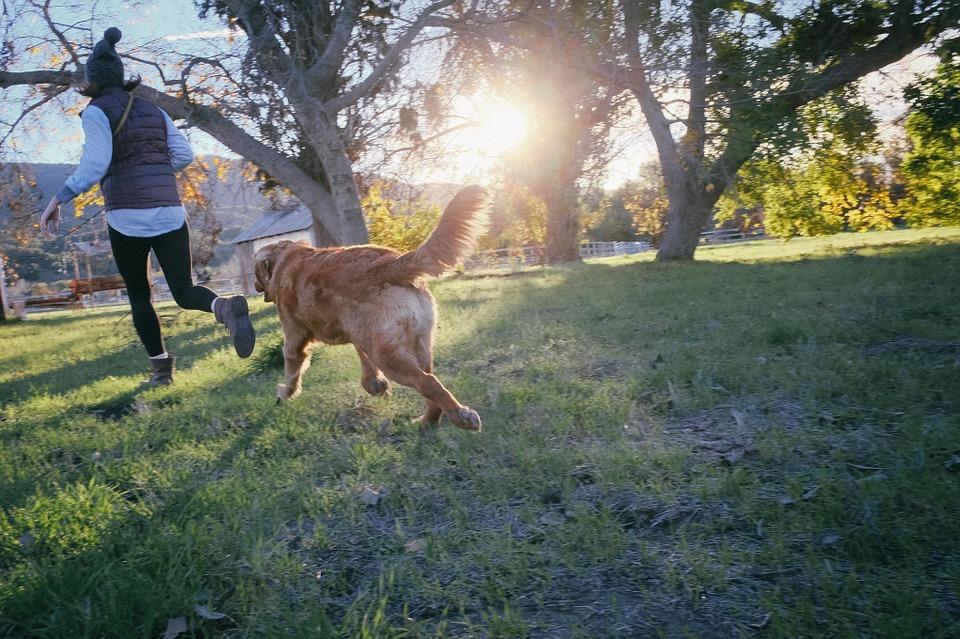 Hundar och hälsa
